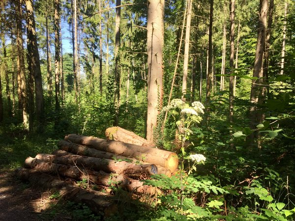 natur, wald, sommer