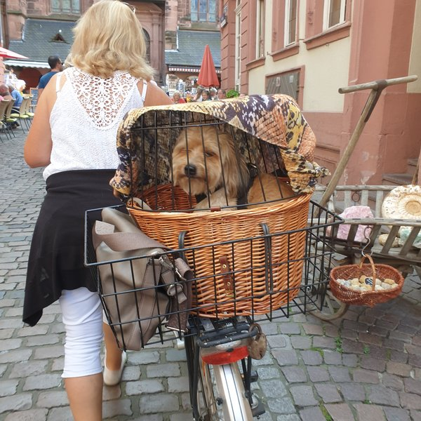 tiere, transport