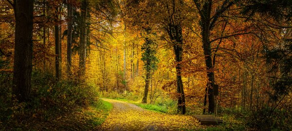 herbst, wald