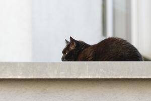 Der Kater auf dem kalten Blechdach / The comcat on the cold tin roof